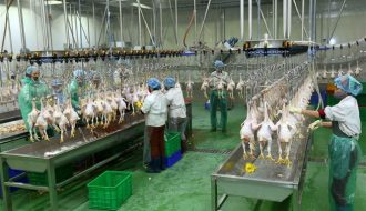 2030 lượng tiêu thụ thịt và trứng trên thế giới có sự thay đổi như thế nào?