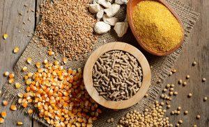 Acid hữu cơ là gì? Những lưu ý khi bổ sung vào thức ăn của gia cầm