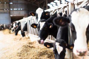 Biện pháp chăm sóc gia súc trong mùa mưa bão để chúng luôn khỏe