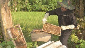 Các kỹ thuật trong chăn nuôi ong mà nhà nhà cần biết