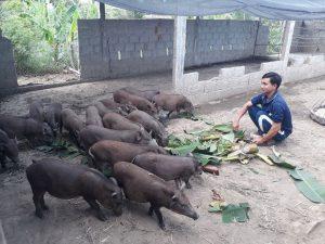 Chăn nuôi heo rừng thành công từ mô hình chăn nuôi dưới đây