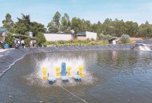 Công nghệ Biofloc và bí quyết thành công khi nuôi tôm nước lợ