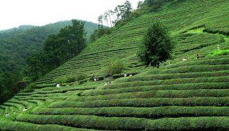 Cùng khám phá ngành nông sản Hàn Quốc với nhiều sản phẩm phong phú