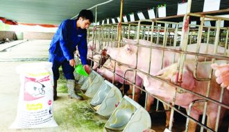 Hướng đi mới của ngành chăn nuôi Việt Nam khi thị trường thiếu thịt heo
