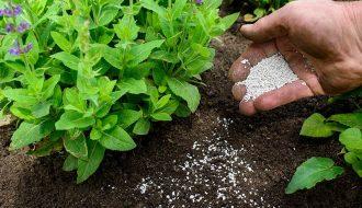 Kỹ thuật bón phân cho cây trồng đúng cách ít người biết