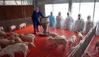 Liệt kê 5 bệnh thường gặp ở lợn và biện pháp phòng tránh hiệu quả