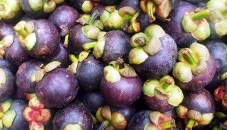 Măng cụt - Kỹ thuật trồng loại cây này và xử lý ra hoa kết trái
