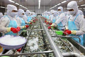 Một số vấn đề ngành tôm gặp phải trên thị trường sản xuất và xuất khẩu