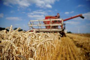 Nghi cơ nguồn cung cấp lương thực bị gián đoạn trước đại dịch covid