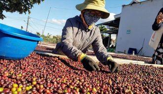 Nhiều mặt hàng nông sản Việt Nam chuẩn bị xuất khẩu sang thị trường EU