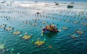 Những chú ý cần thiết khi thực hiện kỹ thuật nuôi trồng thủy sản