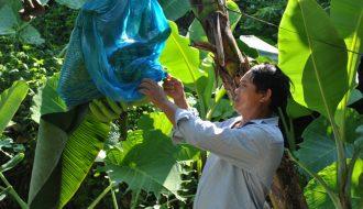 Những loại nông sản Việt được thế giới sử dụng nhiều nhất hiện nay