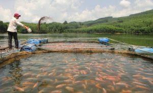 Sức khỏe cá phải đảm bảo được theo dõi