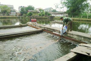 Nuôi trồng thủy sản và tầm quan trọng của các chế phẩm sinh học