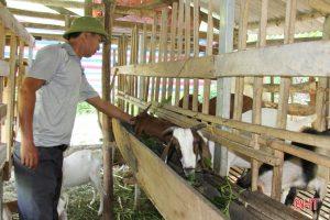 Phương pháp chăm sóc Giống Dê Boer hiệu quả cho nhà nông