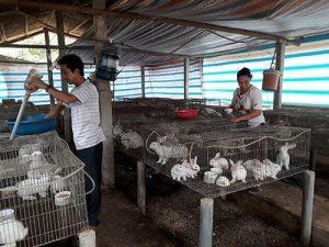 Phương pháp chăm sóc thỏ sinh sản để bà con nông dân tham khảo