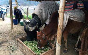 Phương pháp phòng chống rét cho vật nuôi người dân cần thực hiện