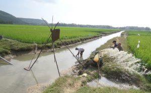 Rửa mặn-việc làm cần thiết sau vụ tôm để canh tác hiệu quả