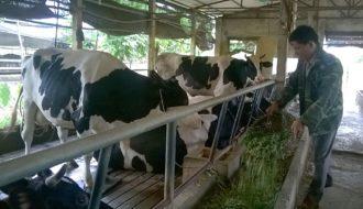 Ngành sữa bò thế giới trong tương lai có xu hướng phát triển