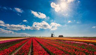 Tại sao Hà Lan là nước có lượng nông sản đứng hàng thứ 2 trên thế giới?