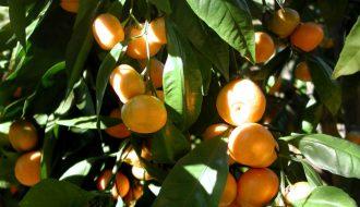 Tất tần tật về kỹ thuật trồng cây ăn quả bạn cần biết
