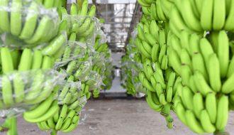 Thương lái Trung Quốc thu mua nên giá nông sản Việt Tăng nhanh