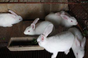 Tổng hợp 5 lưu ý cần thiết trong chăn nuôi thỏ để hiệu suất cao