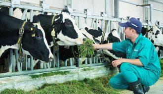 Tổng quan về sản xuất và thị trường thức ăn của ngành chăn nuôi