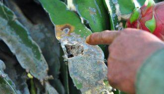 TOP 11 bệnh thường gặp ở cây trồng và biện pháp phòng bệnh