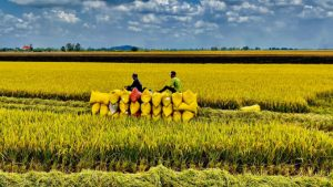 TOP 6 điểm nhấn trong ngành nông nghiệp Việt Nam