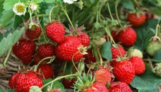 Top 7 cây trồng ngắn ngày đem lại hiệu quả, năng suất cao