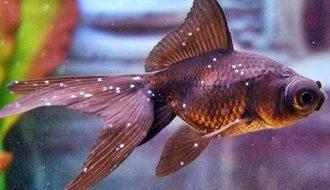 Bệnh lở loét trên cá cảnh và biện pháp phòng chống