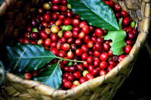 Với tình hình dịch Covid-19 chưa kết thúc giá cà phê sẽ như thế nào?