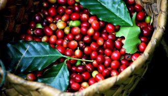 Với tình hình dịch Covid-19 chưa kết thúc, giá cà phê sẽ như thế nào?