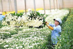 Xuất khẩu hoa sang các nước trên thế giới dần khôi phục